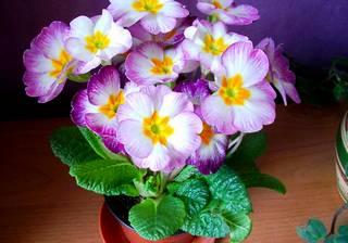 Красивые домашние цветы: как вырастить и как ухаживать