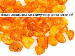 Янтарная кислота для комнатных растений: применение и отзывы
