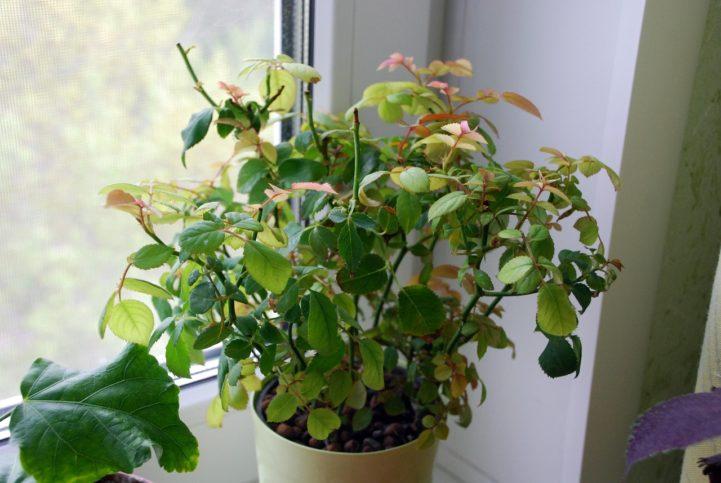 Как выглядит паутинный клещ на комнатных растениях: фото