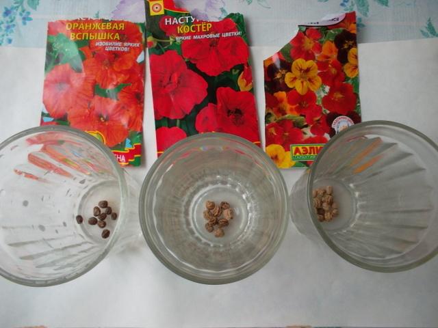 Как собрать семена наструции