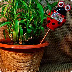 Зачем нужен индикатор влажности почвы комнатных цветов