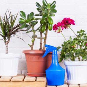 Фунгициды: борьба и профилактика болезней комнатных растений