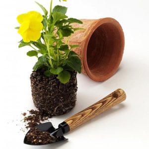 Фитофтороз почвы — причина возникновения (возбудитель)