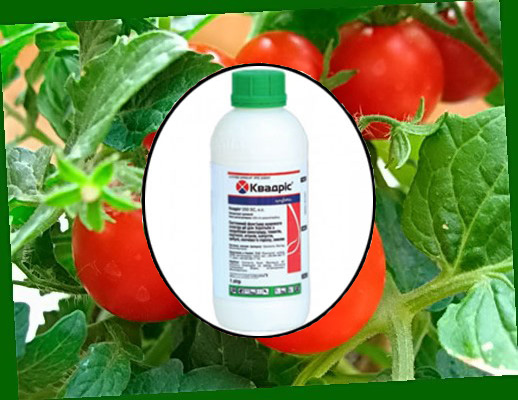 Фунгицид Квадрис для защиты растений