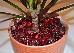 Гидрогель: инструкция и технология выращивания растений