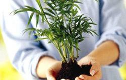 Пересадка комнатных растений: технология и благоприятные дни