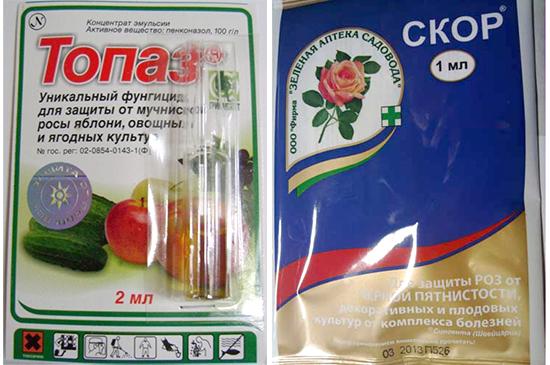 Препараты для лечения альтернариоза и ложной мучнистой росы