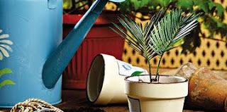 Все виды удобрений для комнатных растений