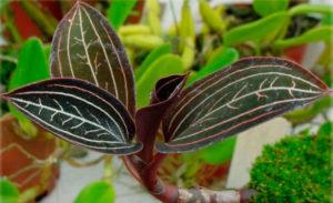 Что известно о растении