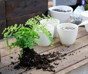 Правильный уход за растением дома