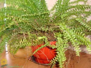Какими могут быть проблемы при выращивании