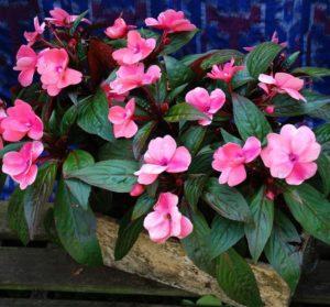 История цветка и его названия