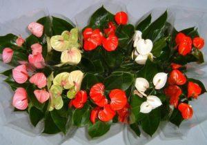 Как называется цветок у которого цветут листья