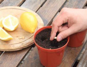 Как вырастить растение из косточки