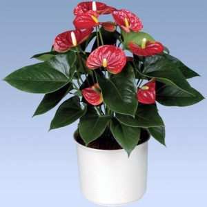 Как называется и как выглядит цветок