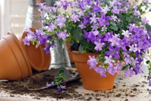 Как правильно посадить в горшок цветок дома