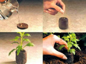 Как правильно сажать семена на рассаду в торфяные таблетки