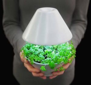 Как создать искусственное освещение для комнатных растений