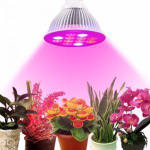 Светодиодные лампы для цветов