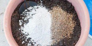 Минералы для подкормки растений: Агроперлит и Вермикулит. Чему отдать предпочтение?