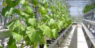 Для чего нужно подпитывать растения углекислым газом, как провести подкормку правильно