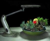 Выбор ламп для комнатных растений: основные виды и рекомендации по применению