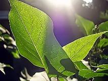 Питание растений углекислым газом: его значение, необходимый уровень концентрации