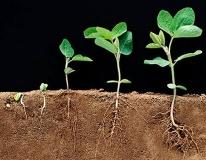 Стимуляторы роста корней растений: наименования и характеристики