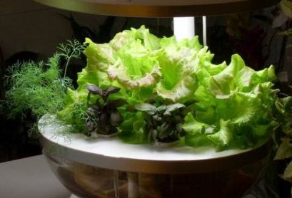 Как приготовить раствор для гидропоники
