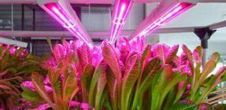 Отзывы о фитолампах — светодиодных лампах для растений
