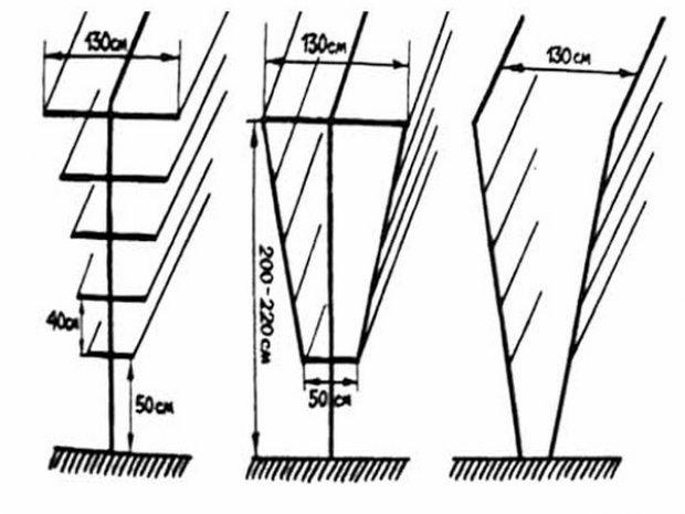 Вертикальная шпалера