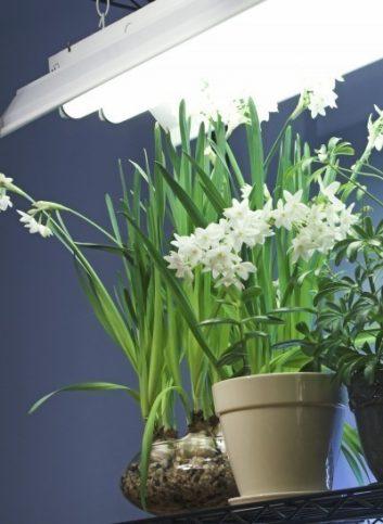 Люминесцентная фитолампа для растений