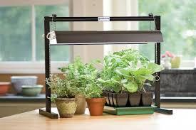 Как выбрать фитолампу для выращивания растений