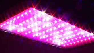 Отзывы о фитолампах - светодиодных лампах для растений