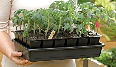 Как выбрать посадочный материал для домашнего выращивания