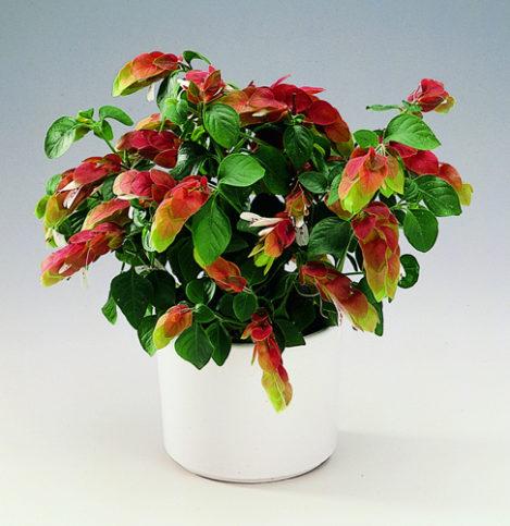Какие болезни ивредители угрожают цветку?