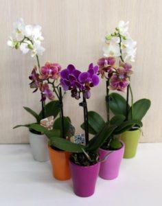 Использование янтарной кислоты для орхидей