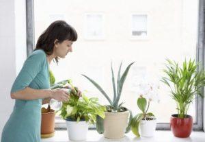 Инструкция по применению Актары для комнатных растений