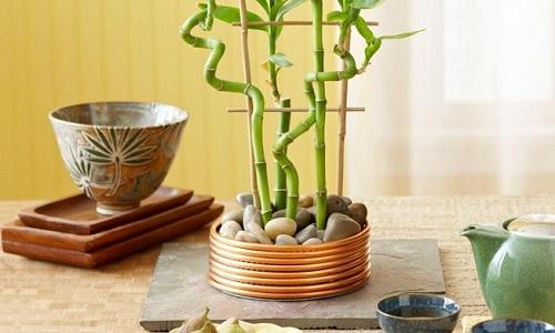 Растение бамбук в интерьере