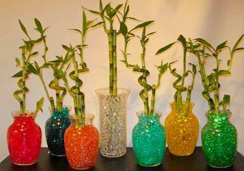 Выращивание бамбука в ёмкости с гидрогелем