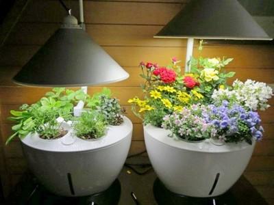 Проблемы почвы комнатных растений: можно ли выращивать цветы без почвы