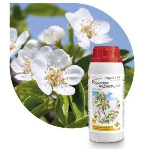Бордосская жидкость в домашнем цветоводстве