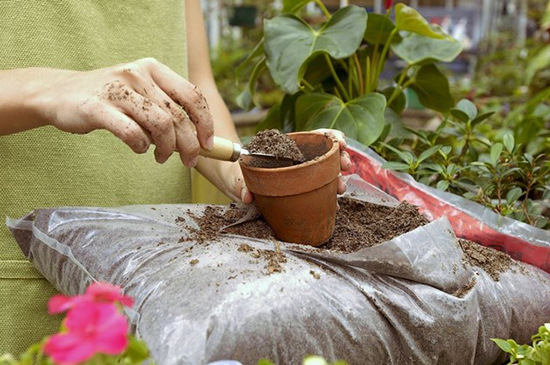 Органические удобрения для комнатных растений