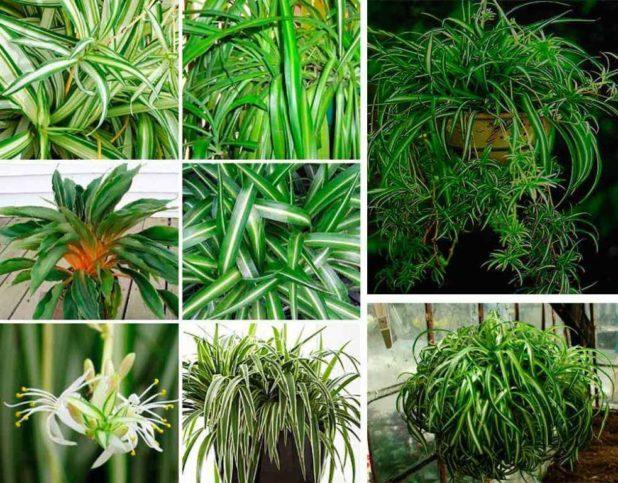 Особенности растения