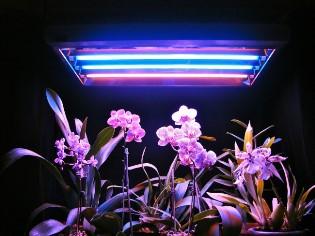 Лампы для освещения комнатных цветов: на что обратить внимание при выборе