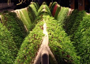 Система выращивания аэропоника: особенности метода и как сделать оборудование своими руками