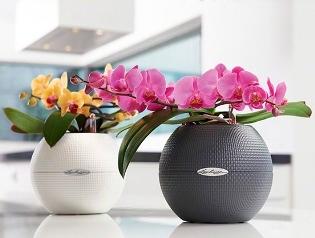 Виды горшков и кашпо для орхидей: выбираем правильный