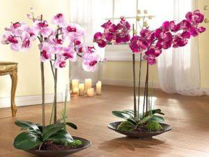 Горшки и кашпо для орхидей: разновидности