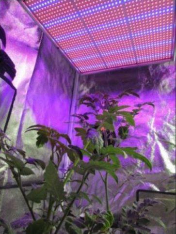 Выращивание под фитолампами