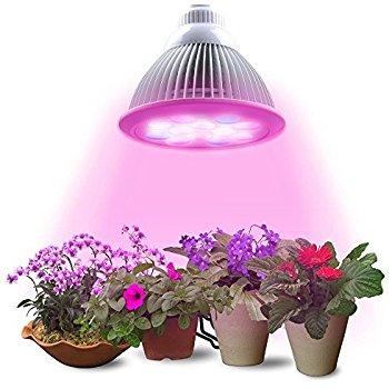 Лампы для освещения комнатных цветов: начто обратить внимание при выборе